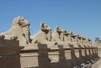 Widderallee in Karnak