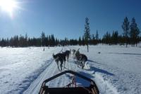 Bilder von Finnland - Unterwegs mit dem Hundeschlitten