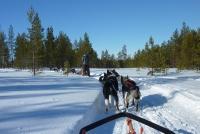Hundeschlitten in Finnland