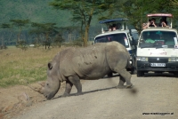Nashorn am Lake Nakuru