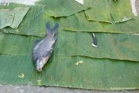 Fisch in Laos