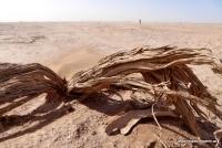 Ein Baum in der Wüste