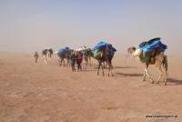 Eine Dromedarkarawane in der Wüste