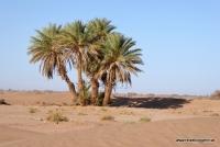 Palmen in der Wüste