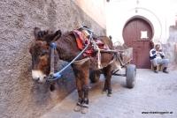 Ein Esel im Souk in Marrakesch