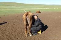 Eine Nomadin beim Kühe melken