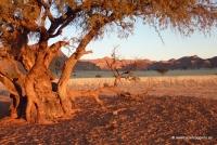 Campingplatz Namibia