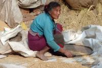 Eine Nepalesin sortiert Reis