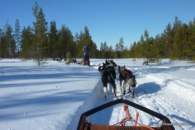 Mit dem Hundeschlitten durch Finnland