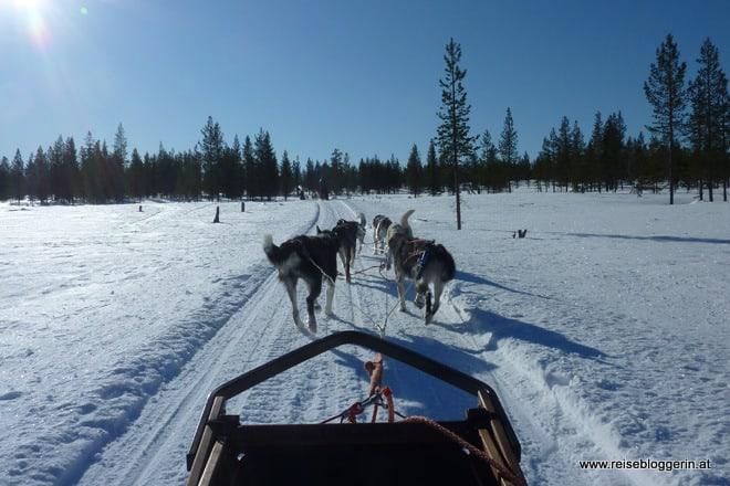 Hundeschlittenfahrt in Finnland