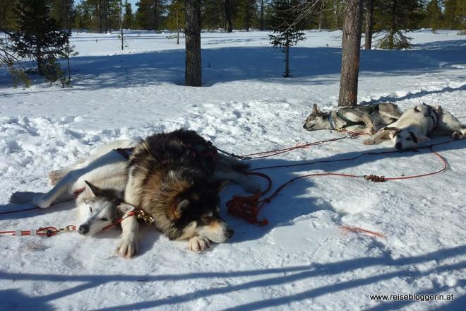Die Huskies machen Pause