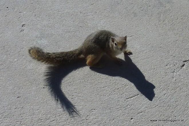 Eichhörnchen im Etosha Nationalpark