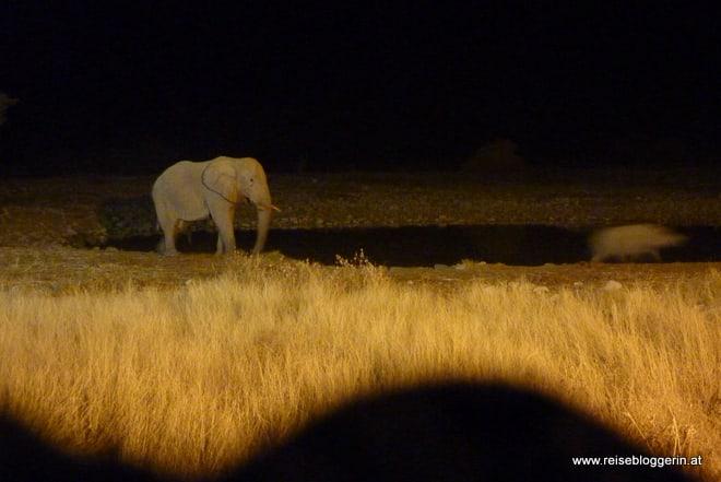 Elefant bei Nacht