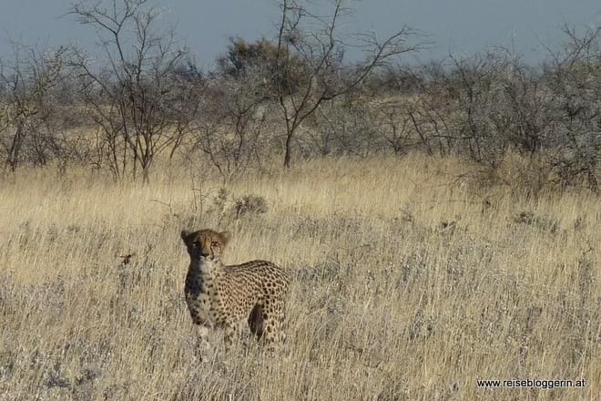 Namibia: Ein Tag im Etosha Nationalpark