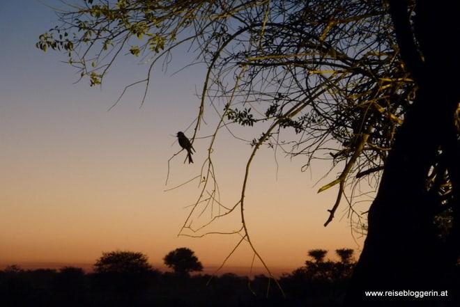 Namibia bei Nacht