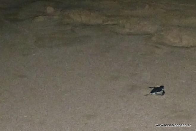 Schildkrötenbaby