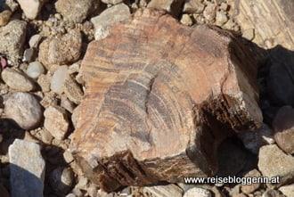 Versteinertes Holz in Namibia