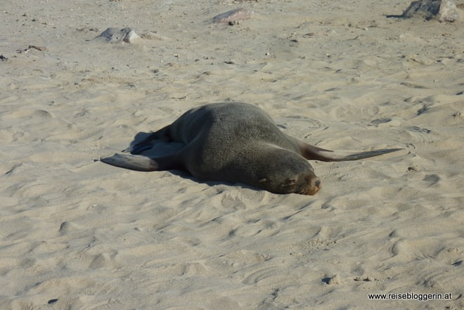 Robben am Cape Cross