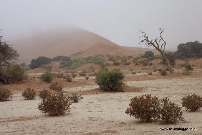 Düne in Namibia im Nebel