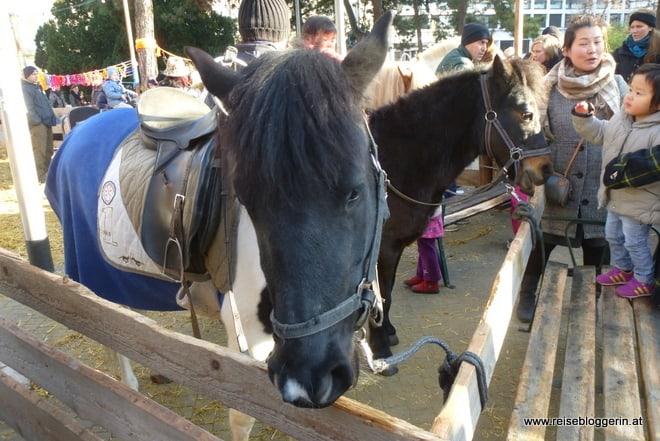 Ponyreiten am Karlsplatz