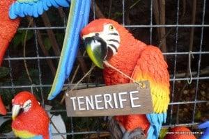 Papagei Tenerifa