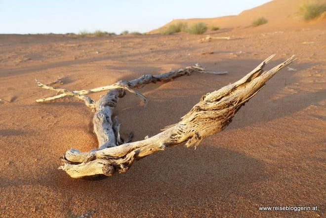 Ein alter Ast in der Wüste