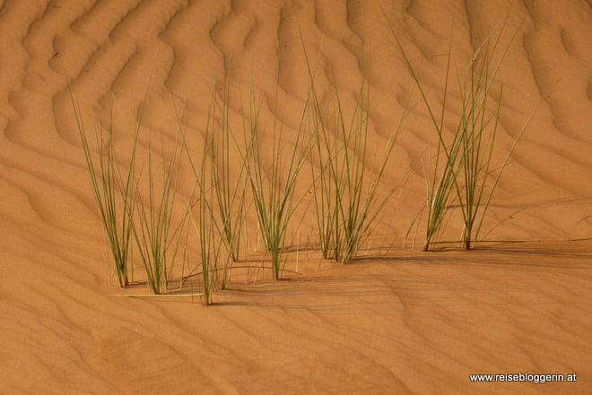 Struktur und Muster in der Wüste