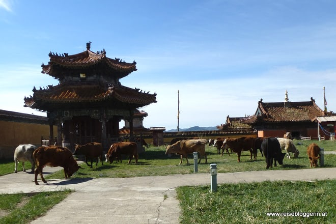 Kühe im Kloster