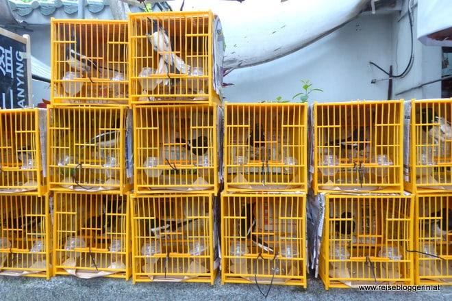 Bird Market Hongkong