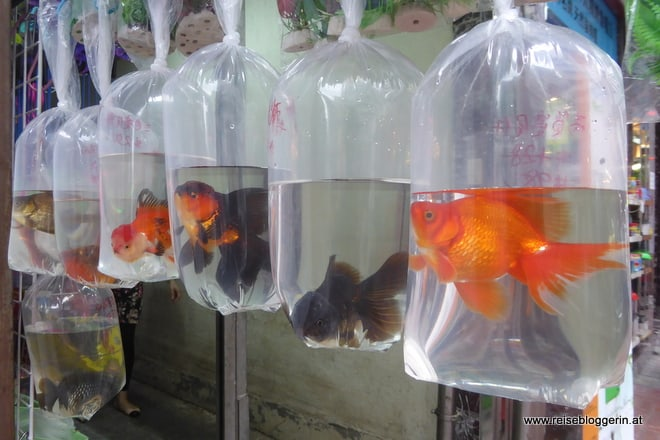 Goldfish Market Hongkong