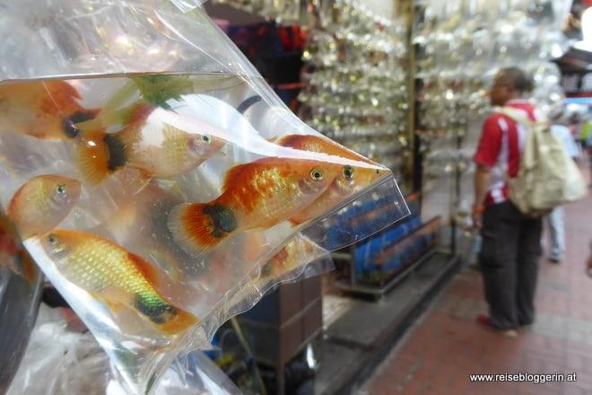Goldfishmarket