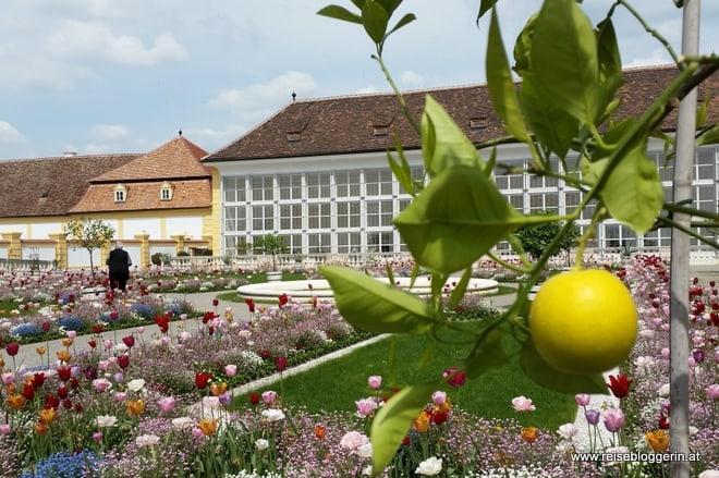 Orangerie Schloss Hof