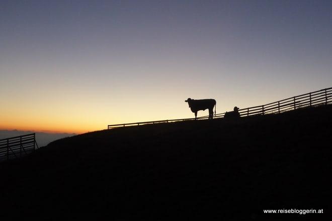 Kuh im Schatten am Goldeck