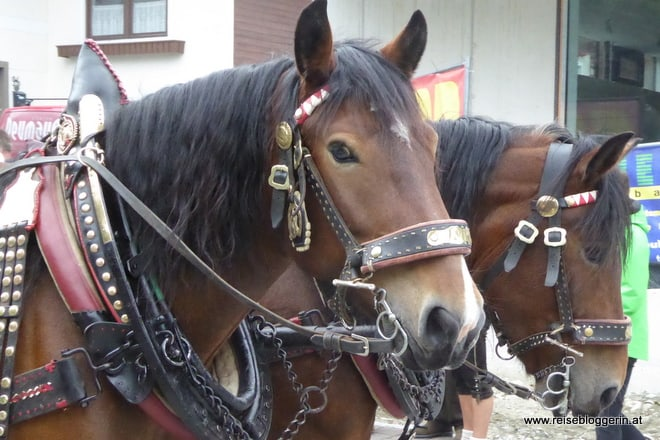 Salzburger Bauernherbst