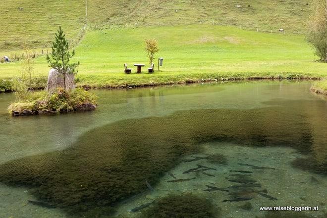 Fischteich beim Landgasthaus Weixen
