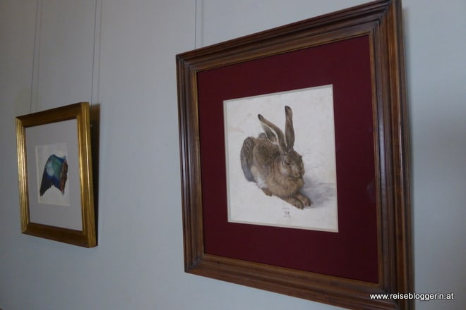 Der Hase von Dürer in der Albertina