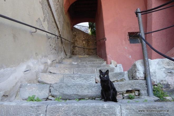 Katze in Porto Ercole