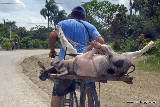 Das Fahrrad ist ein wichtiges Transportmittel auf Kuba