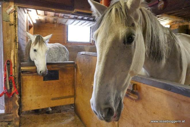 Pferde im Zauchtalerhof
