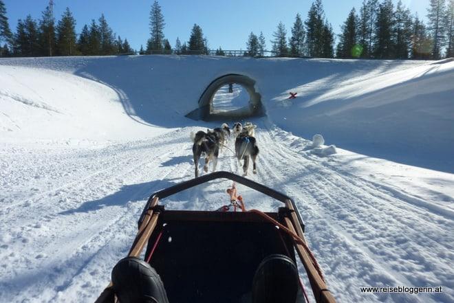 Durch Finnland mit dem Hundeschlitten