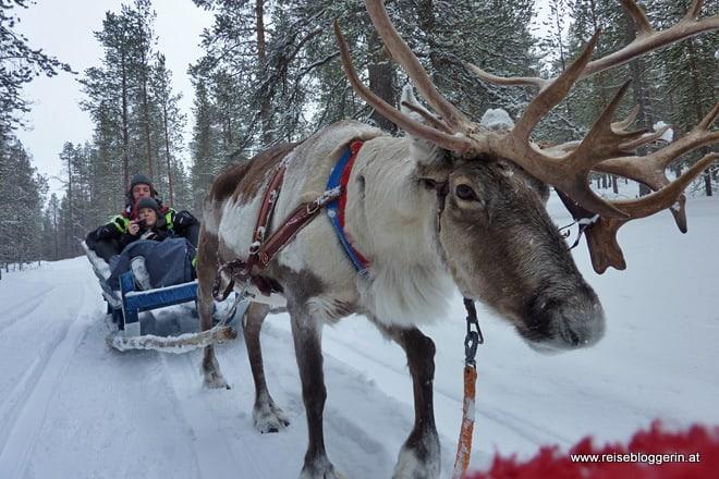 Meine Rentierschlittenfahrt in Finnland