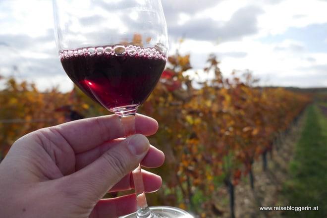 Rotweinherbst in Horitschon