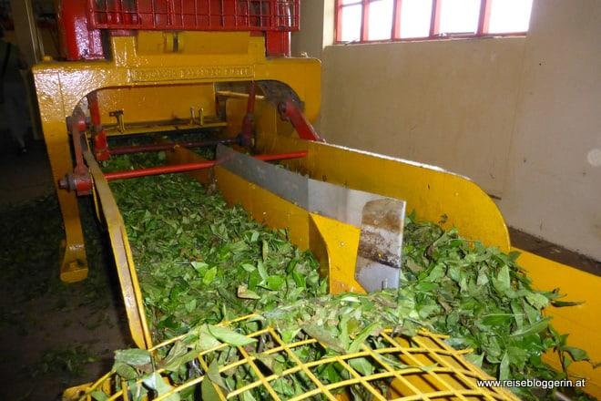 Teefabrik auf Mauritius