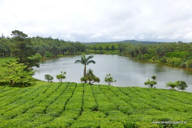 Teeplantage Mauritius