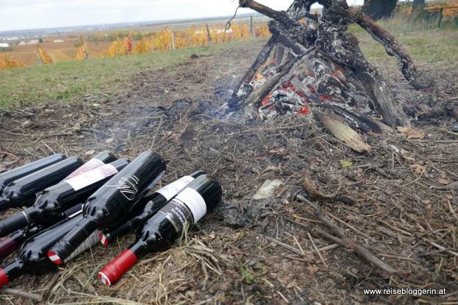 Weinverkostung in Horitschon