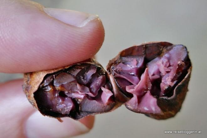 fermentierte Kakaobohne