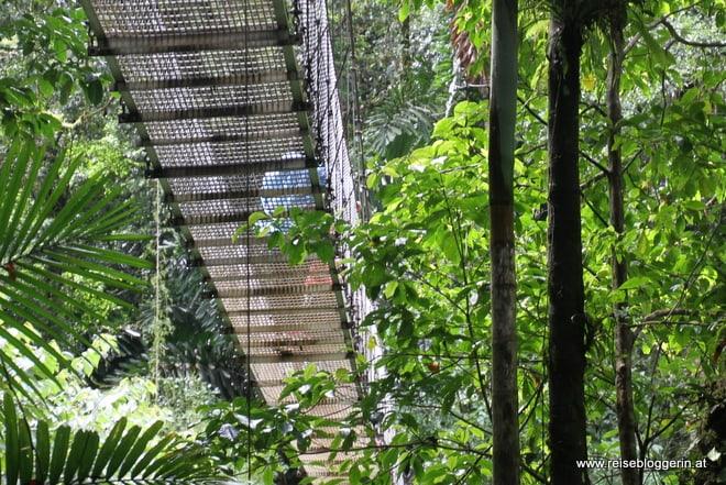 Hängebrücke im Mistico Arenal Hanging Bridges Park