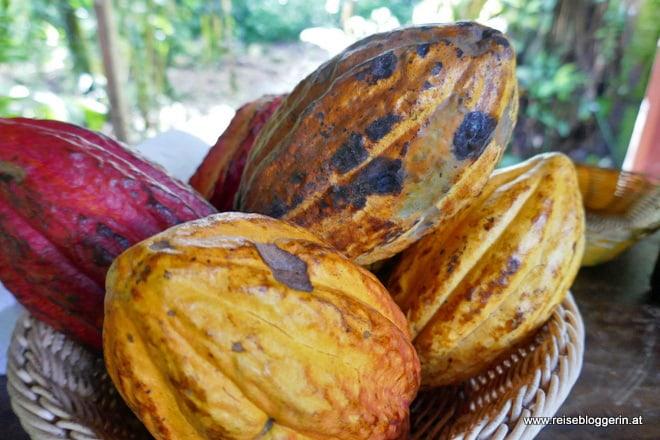 Von der Kakaobohne zur Schokolade - Eine Schokoladentour in Costa Rica