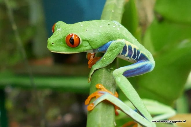 La Fortuna in Costa Rica - Von Hängebrücken und Wasserfällen