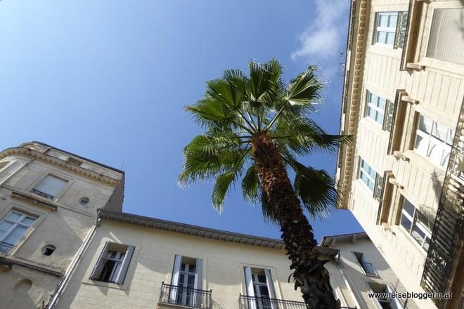 Palme in Montpellier